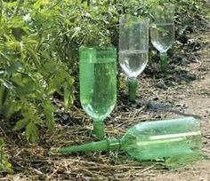 Plant Waterer from Reused Pop Bottles - Drip watering helps avoid run-off and allows the water to be absorbed deeply into the soil getting to the roots of the plant. Reusing plastic bottles to accomplish this is a win/win situation.
