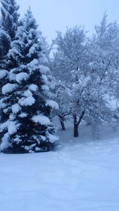 Winter wonderland #iceland #snow #winter
