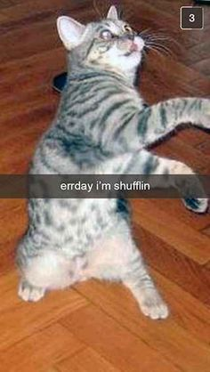 27 Snapchats From Your Cat