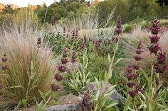 Plantscapeslandscapesmy land on Pinterest California