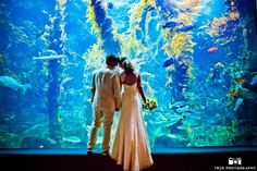 Four Reasons to Tie the Knot at Birch Aquarium