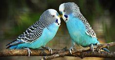 O SOS Animal com amor foi criado para  te ajudar a tirar dúvidas  sobre seu animal  ajudando a você a ampliar seu conhecimento sobre eles .