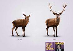 Garage: Deer
