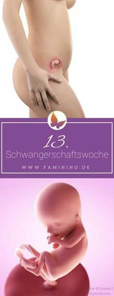 13. SSW (Schwangerschaftswoche)