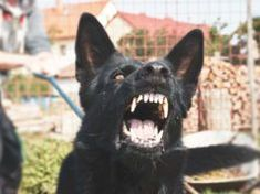 20 Most Dangerous Dogs in the World Dog Sitting Rates, Maltese Dog Breed, Dog Health Tips, Cat Health, Dogs Ears Infection, Worms In Dogs, Make Dog Food, Dangerous Dogs, Homemade Dog Food