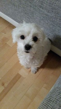 Hunde Foto: Zehra und Pamuk - Hat wer Leckerlie gesagt??.jpeg Hier Dein Bild hochladen: http://ichliebehunde.com/hund-des-tages  #hund #hunde #hundebild #hundebilder #dog #dogs #dogfun  #dogpic #dogpictures