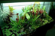AN OLD TV CONSOLE CONVERTED INTO AN AQUARIUM THAT USED TO BE A TV BACK IN THE DAY.....:)
