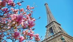 Reserve your international flights among more than 500 Air France destinations worldwide. Find offers from Air France USA and flight schedules. Air France, France Destinations, Airline Tickets, Holiday Travel, Holiday Trip, Travel Deals, Best Hotels, Egypt, Around The Worlds