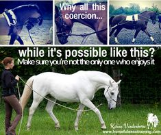 The most common mistakes people make when lunging their horse Riding Quotes, Horse Training Tips, Natural Horsemanship, Horse World, Horse Quotes, Horse Farms, Horse Love, Horseback Riding, Horse Riding