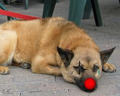 Clown Doggy