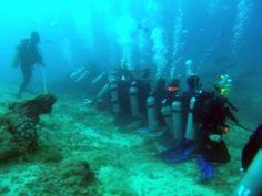 channel islands de californie | Fiji: Home of the World's Greatest Shark Dive? : Travel World News