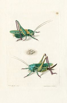 - The naturalist's miscellany, or Coloured figures of natural objects - Biodiversity Heritage Library Cool Insects, Bugs And Insects, Antique Illustration, Botanical Illustration, Science Illustration, Nature Illustrations, Historia Natural, In Natura, Insect Art
