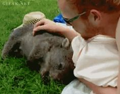 There are important jobs to be done. | 23 Reasons You Should Take A Year Off And Head To Australia -- like look after baby wombats!!!