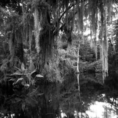 """Everglades photo by @Clyde Butcher"""""""