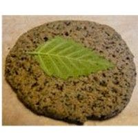 Collect leaves  on your hike and Make A Fossil Print From Kitchen Ingredients. More nature crafts at www.freekidscrafts.com