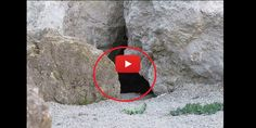 Camera Waits Patiently At The Entrance Of This Cave, You Won't Believe Who Comes Out   Interestingfunfacts.comInterestingfunfacts.com