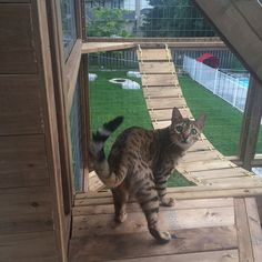 The benefits of a catio or enclosed deck are that you help prevent your feline from coming into contact with other animals that might be carrying communicable diseases, or that might provoke or attack. Diy Cat Enclosure, Outdoor Cat Enclosure, Reptile Enclosure, Cool Cats, Diy Pour Chien, Cat Pen, Outdoor Cats, Outdoor Spaces, Outdoor Living