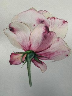 Abstract Watercolor, Watercolor And Ink, Watercolor Illustration, Watercolor Flowers, Watercolor Paintings, Flower Drawing Tutorials, Flower Art Drawing, Lily Painting, Painting & Drawing