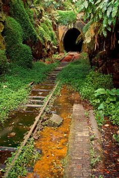 New South Wales, Australia - Disused Helensburgh Station - Opened in 1889 and operated for 26 years before closing in 1915 and a newer facility opened. The tracks and tunnel are still in place almost 100 years later, but is overgrown by nature. Abandoned Train, Abandoned Buildings, Abandoned Places, Abandoned Castles, Abandoned Mansions, Foto Nature, Old Trains, Post Apocalypse, Train Tracks