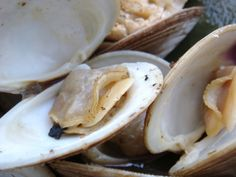 0031 1024x768 Steamed Clams in a Beer, Lemon and Garlic Broth | yep! These are good... And a little spicy.