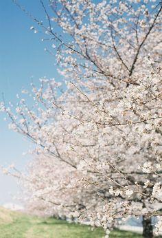 Spring. Love the flowering trees