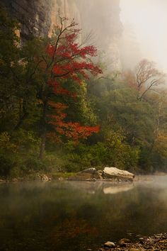 Sweetgum at Roark Bluff.  By Buffalo River Photography