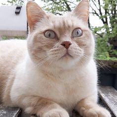 Cute stunned cat <3 Its Only Tuesday, Cat Aesthetic, When You Realize, Cats, Animals, Instagram, Gatos, Animales, Animaux