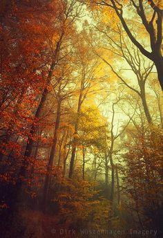 ~~forest dreams | autumn beech trees, Germany | by Dirk Wüstenhagen~~