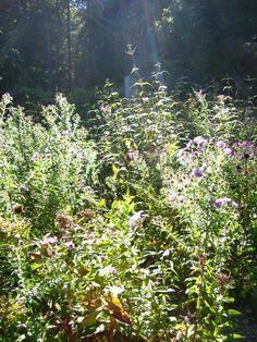 lapham peak butterfly garden ..aka romeo's final resting place