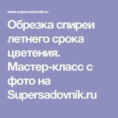 Обрезка спиреи летнего срока цветения. Мастер-класс с фото на Supersadovnik.ru