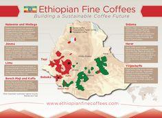 Ethiopian Fine Coffees map of Ethiopia