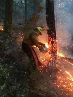A firefighter cuts a burning tree on the Klamath NF (Aug Granite Mountain Hotshots, Wildland Firefighter, Smokey The Bears, Wild Fire, Into The Fire, Hot Shots, Fire Dept, Fire Trucks, Fire Fighters