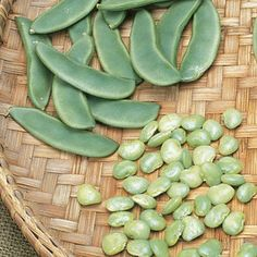 how to grow bean tendergreen improved