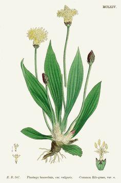 rimedio naturale  antitossico e antimicrobico, consulto naturopatico e prevenzione www.blognaturopatia.com