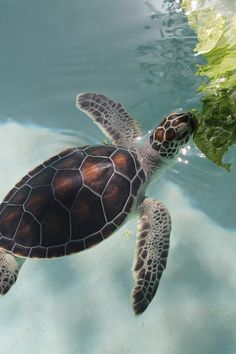 baby sea turtle Photography on Behance