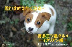 思わず教えたくなる・・・博多三ツ星グルメ -イタリアン編- →timein.jp http://www.timein.jp/item/show/980197427