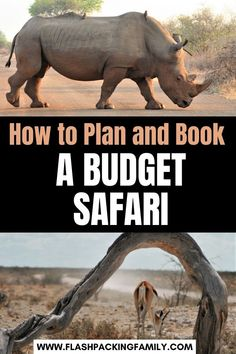 Fancy an African safari but don't fancy the luxury price tag? We have the best tips to help you plan and book a budget safari. Travel Couple, Family Travel, South African Holidays, Audley Travel, Safari Holidays, Private Games, Kruger National Park, Game Reserve, African Countries