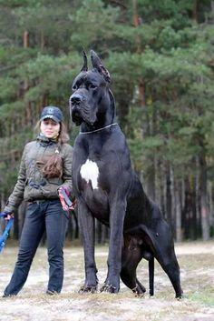 cheval ou chien