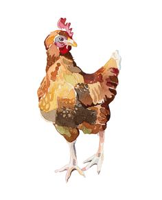 Holly Exley Illustration: Chickens