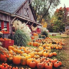 October Simple Pleasure: Shopping for the perfect pumpkin! (Cider mill in Rochester, Michigan) Autumn Day, Autumn Leaves, Hello Autumn, Autumn Scenes, Autumn Aesthetic, Fall Pictures, Fall Pics, Belleza Natural, Fall Harvest