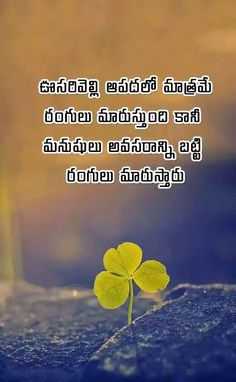 Trendy life quotes lessons learned in telugu Love Quotes In Telugu, Telugu Inspirational Quotes, Inspirational Quotes About Success, Motivational Quotes For Life, Fake Relationship Quotes, Fake Family Quotes, Fake People Quotes, Free Life Quotes, Life Lesson Quotes