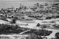 Cape Florida State Park After Hurricane Andrew