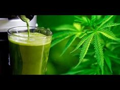 LEAF  The Health Benefits of Juicing Raw Cannabis