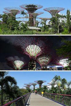 Il coûte cher de visiter les zones intérieures du parc Gardens by the Bay à Singapore, mais s'y promener en extérieur est totalement gratuit.