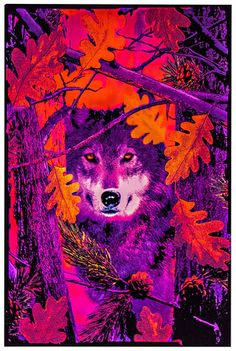 Opticz Autumn Wolf Blacklight Reactive Poster Blacklight Poster at AllPosters.com