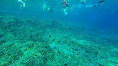 Fundo do mar em Molokini Crater