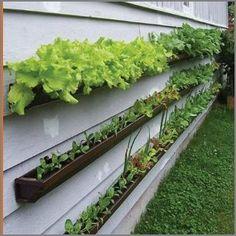 gutter herb garden funky-gardening-ideas