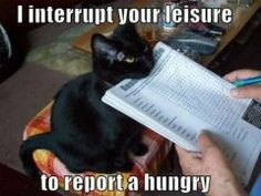 Reporting A Hungry