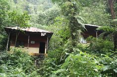 PEKALONGAN, (TubasMedia.Com) - Kanada Pekalongan yang dimaksud adalah Petung Kriyono, Pekalongan yang berada persis di sisi utara dataran Pegunungan Dieng, Jawa Tengah. Untuk mencapai Kecamatan Petung Kriyono, dibutuhkan waktu sekitar 2,5 jam dari pusat kota Pekalongan.
