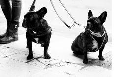 Due cani e basta